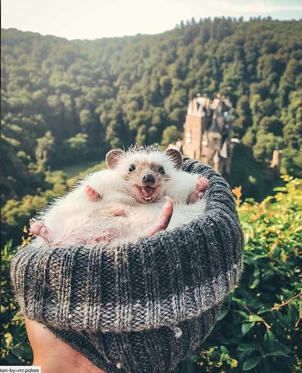 Oto najsłodszy podróżnik na świecie! Mr. Pokee podbija internet