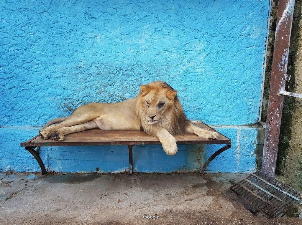 Pordzewiałe klatki, beton i niedożywione zwierzęta. To nie jest zoo, które chciałbyś odwiedzić