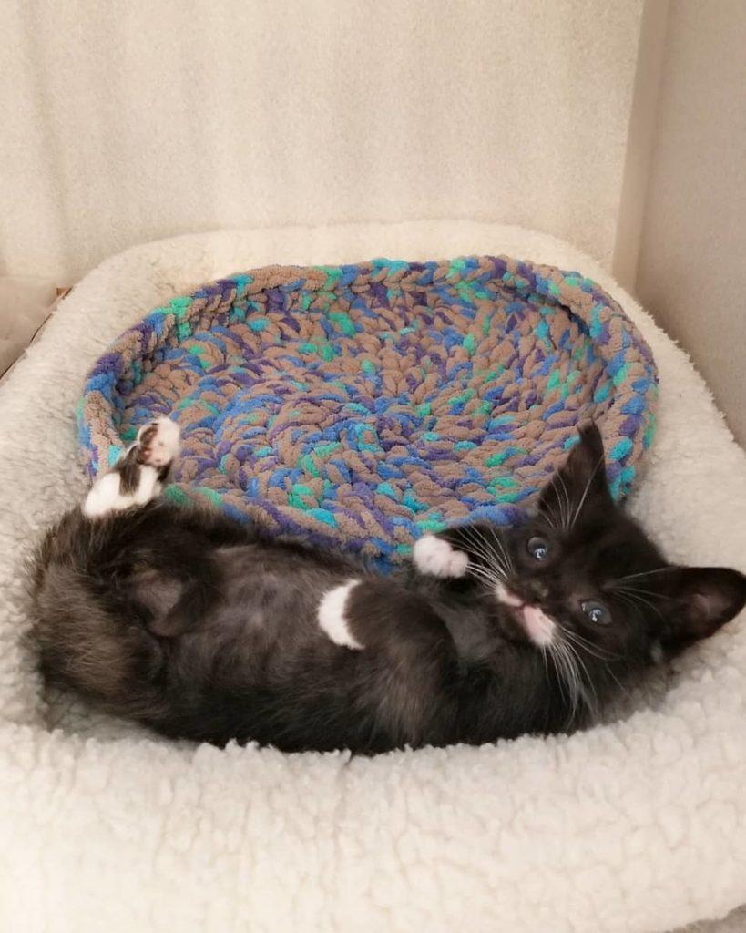 Odnaleźli kota wielkości łyżeczki. Mimo wieku wyglądał jakby dopiero się urodził