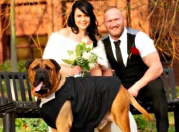 Przyśpieszyli ślub przez swojego umierającego psa. Chcieli, aby w ten dzień mógł być przy nich