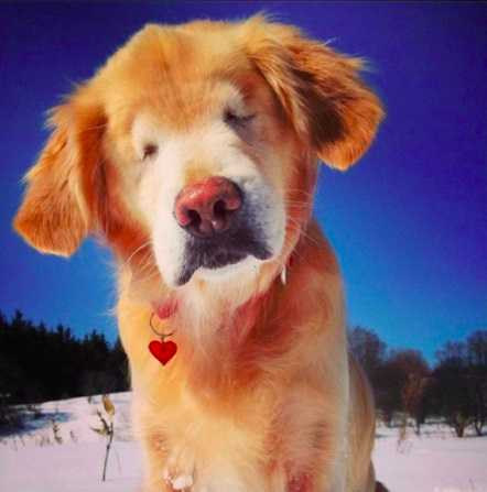 Ten filmik roztapia nawet najzimniejsze serca. Starszy i niewidomy pies bawi się na śniegu