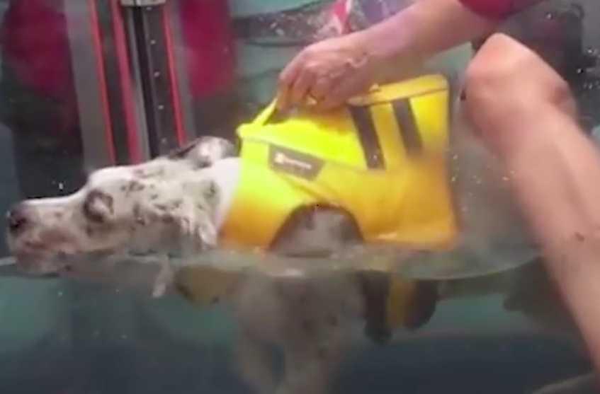 Adoptowała szczeniaka, który okazał się być inny, więc zdecydowała się przygarnąć kolejnego psa