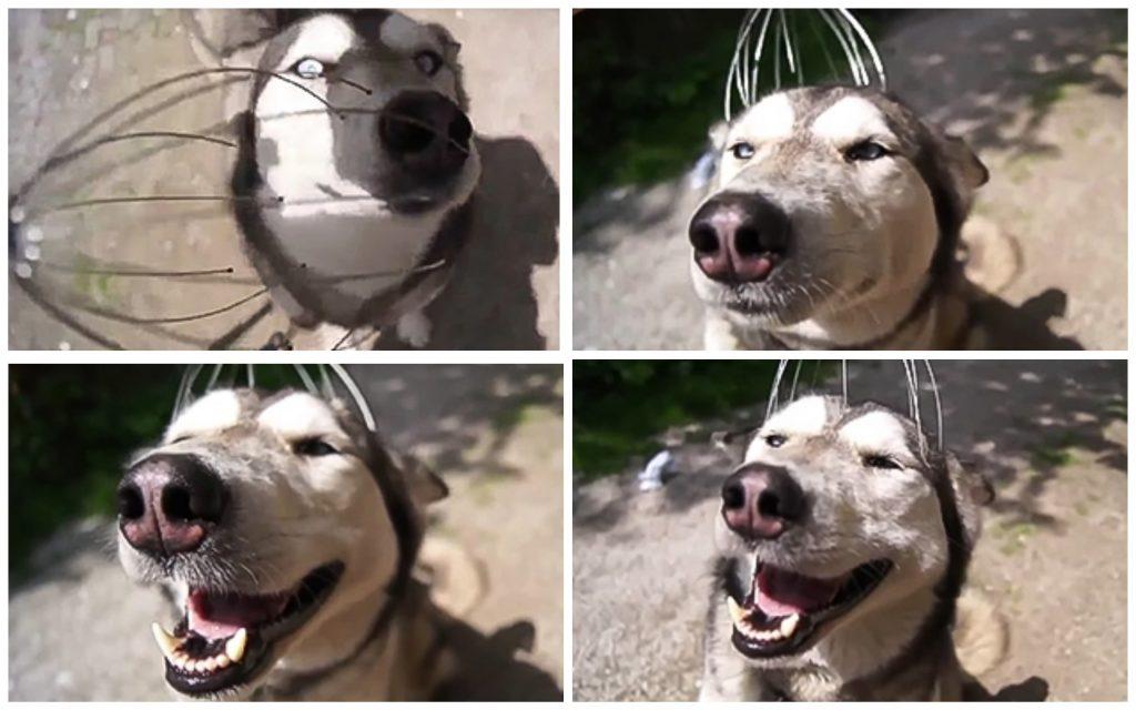11 psów, których mimika jest po nie do przebicia. Nie potrafią ukryć emocji