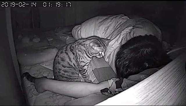 Zostawił na noc włączoną kamerę, aby zobaczyć, co robi jego kot podczas, gdy on śpi