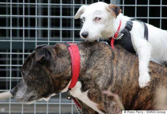 Znaleźli dwa psy w kanałach. Okazało się, że jeden jest przewodnikiem drugiego. Wzruszająca przyjaźń.