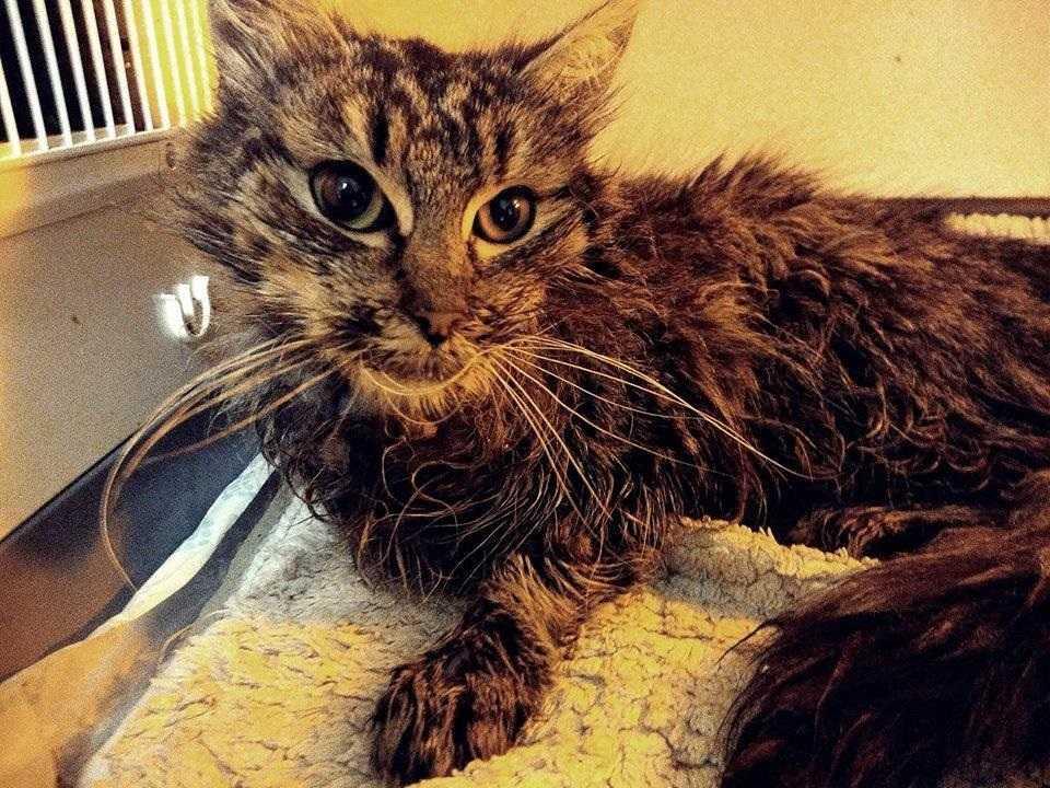 Maleńka kotka została porzucona i pobita