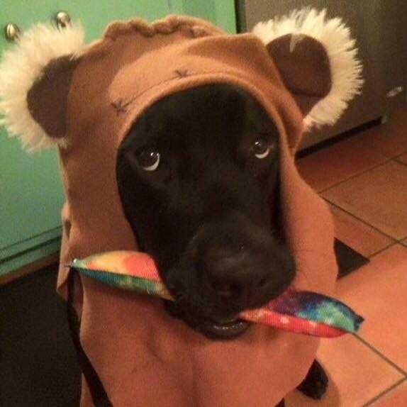 W środku nocy pies ostrzega rodziców. Ich syn był w poważnym niebezpieczeństwie