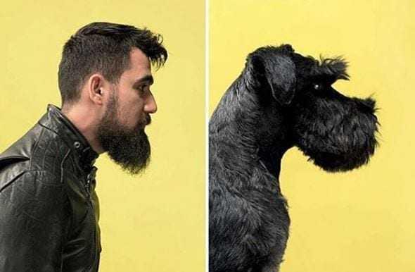 Psy podobne do właścicieli. Zdjęcia, które rozbawią do łez