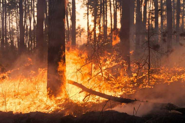 """Bydgoszcz. Groźny pożar lasu. """"Sytuacja jest bardzo poważna"""""""
