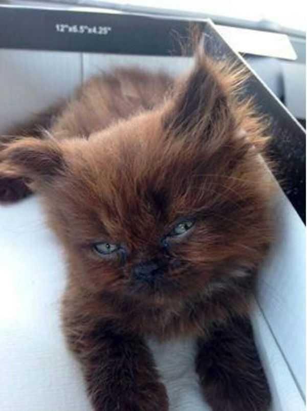 Przygarnęła małego, chorego kotka. Rok później nie wierzyła własnym oczom, co z niego wyrosło