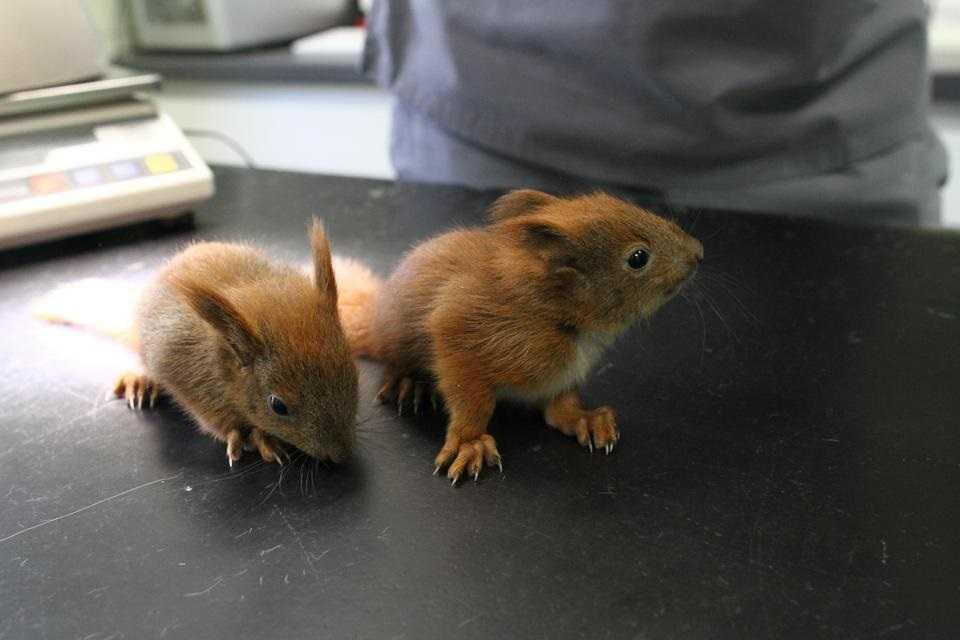 Wiewiórki sierotki. Tu mają troskliwą opiekę
