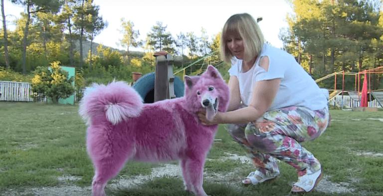 W lesie znaleziono dwa porzucone psy. Ludzi zaniepokoił ich nienaturalny kolor sierści