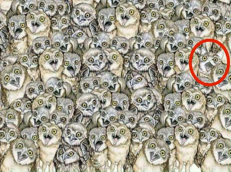 Test na spostrzegawczość: potrafisz odnaleźć kota pośród sów? To nie jest łatwe