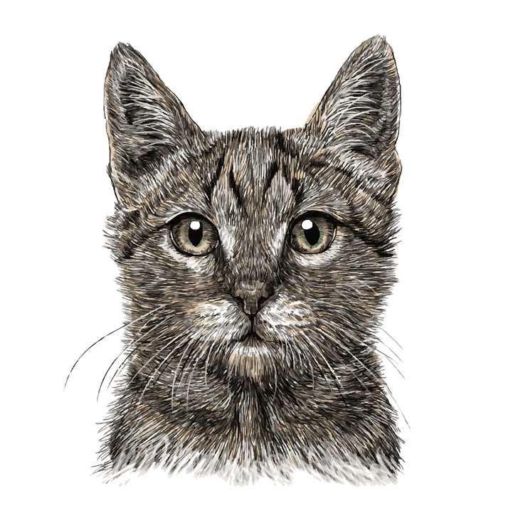 Pierwsze zwierzę, jakie zobaczyłeś na tym obrazku, mówi wiele o Twojej osobowości