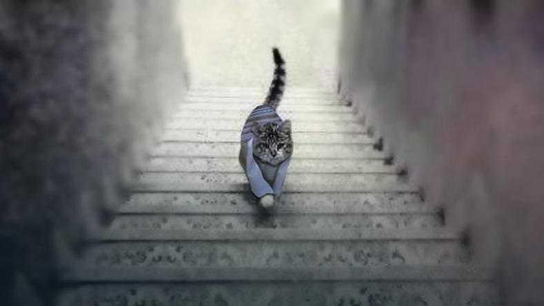 Kot idzie w górę, czy w dół? Odpowiedź na to pytanie, zdradza kim jesteś