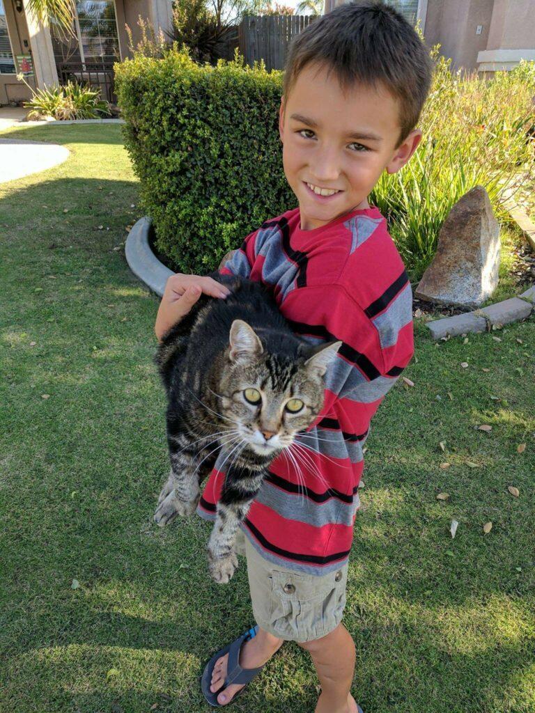 Kot uratował dziecko przed niebezpiecznym psem. Niesamowity koci obrońca