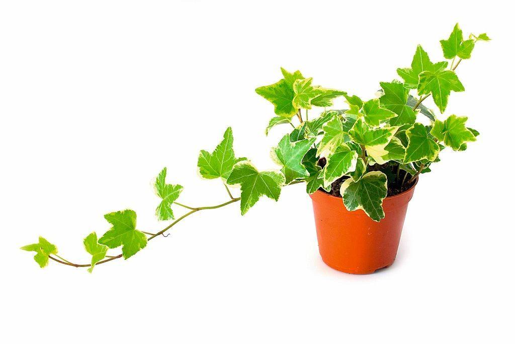 Wstaw te rośliny do swojej sypialni, a będziesz lepiej się wysypiać