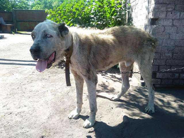 Odnalazła swojego zaginionego psa po 2 latach. Ponowne spotkanie porusza do głębi