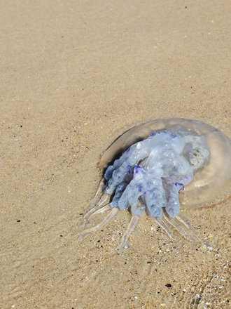 Co robić w przypadku oparzenia meduzy?