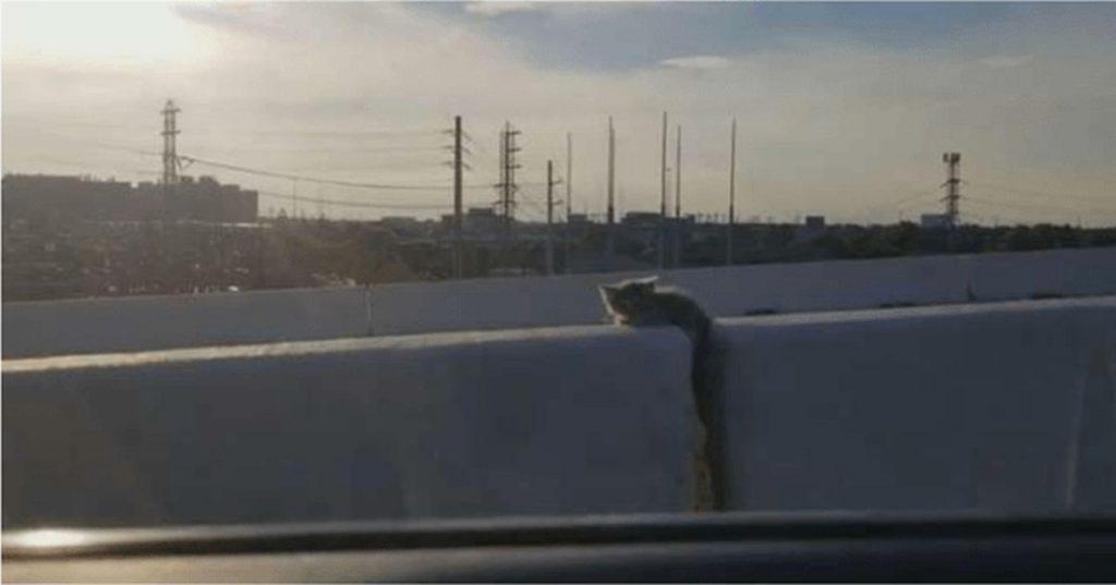 Jadąc autostradą kierowca dostrzegł dziwny cień i natychmiast zawrócił (i dobrze zrobił)