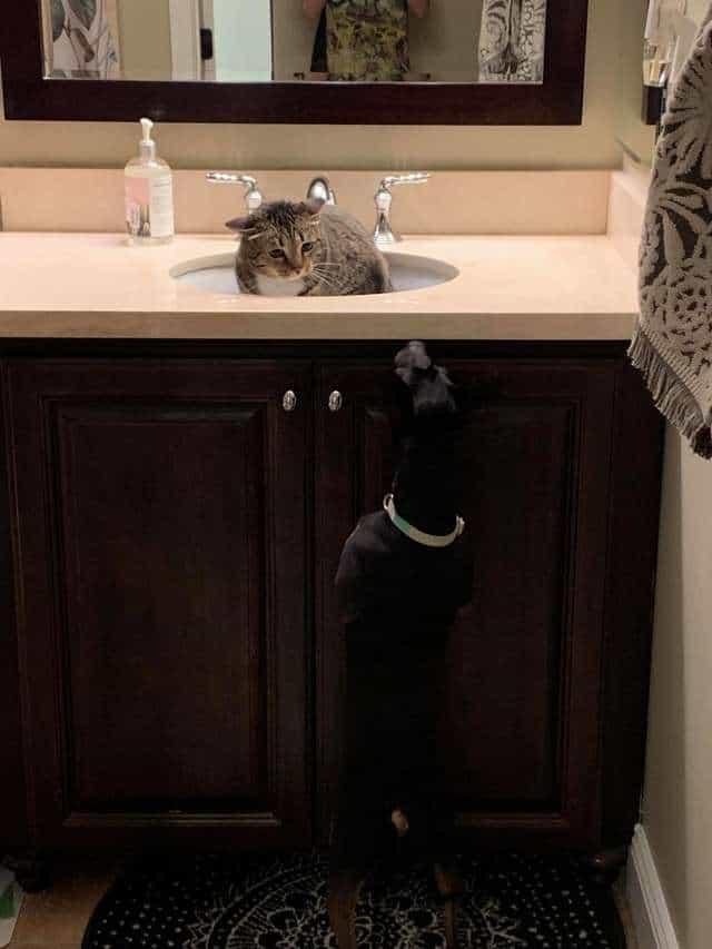 Rodzina adoptuje psa, a ich kot…przeprowadza się do umywalki. Najzabawniejsza historia na świecie