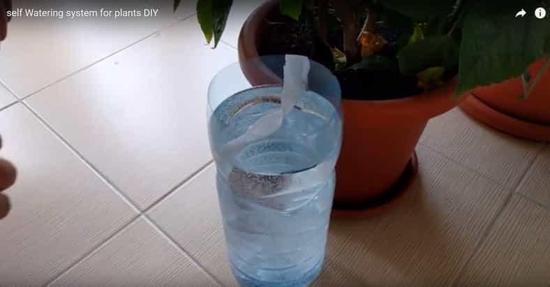 Sprytna metoda podlewania roślin - idealna na upały i na czas wyjazdu