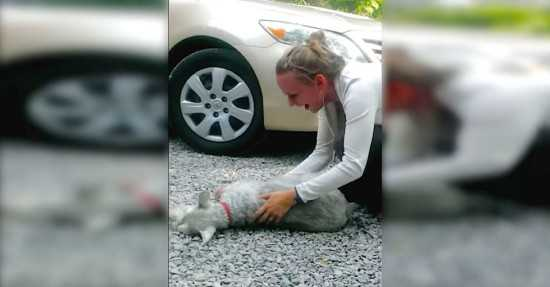 Po 2 latach rozłąki pies zobaczył swoją panią. Z podekscytowania stracił przytomność