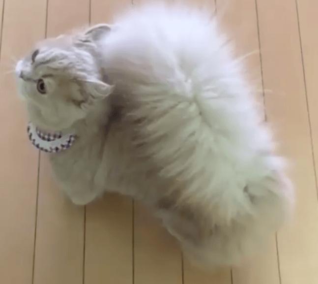 Ta kotka zyskała masę fanów, a wszystko przez swój wyjątkowy ogon