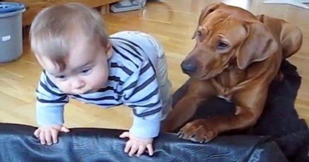 Pies widzi, że chłopiec chce wejść do jego posłania i wykonuje poruszający gest w jego stronę