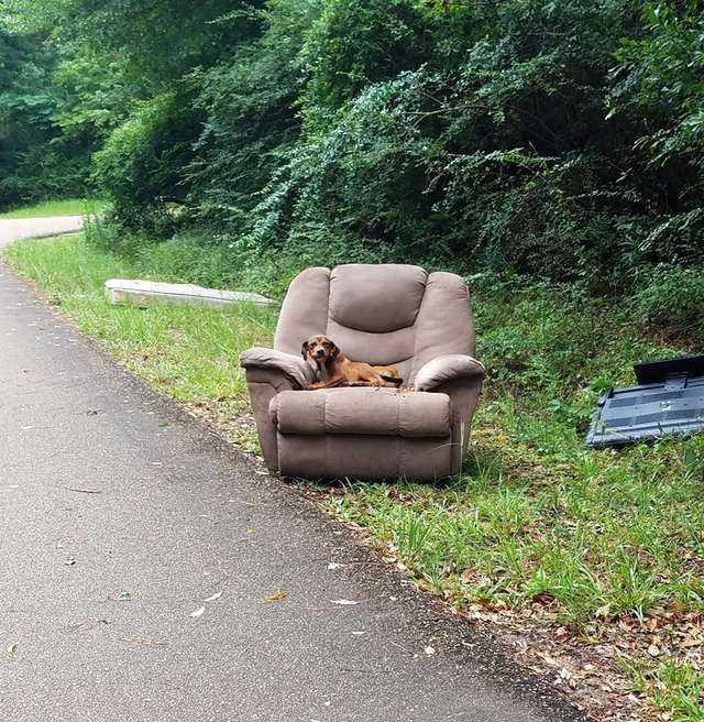 Smutny pies znaleziony w lesie ze starym fotelem. Został porzucony i wciąż czekał na właściciela. Widok łamie serce
