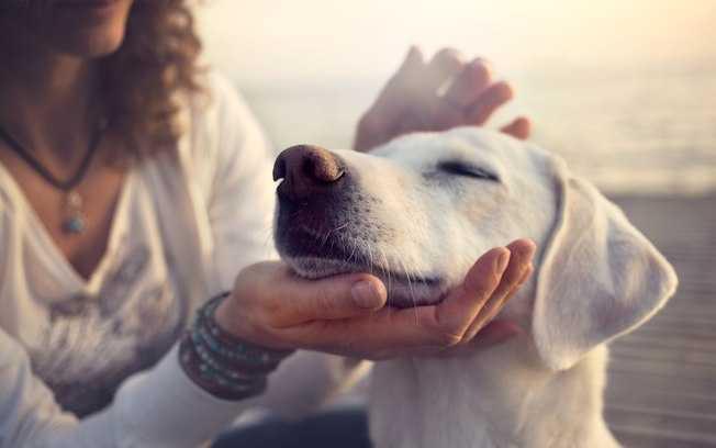 Psy wyczuwają choroby. Sprawdź, jakie