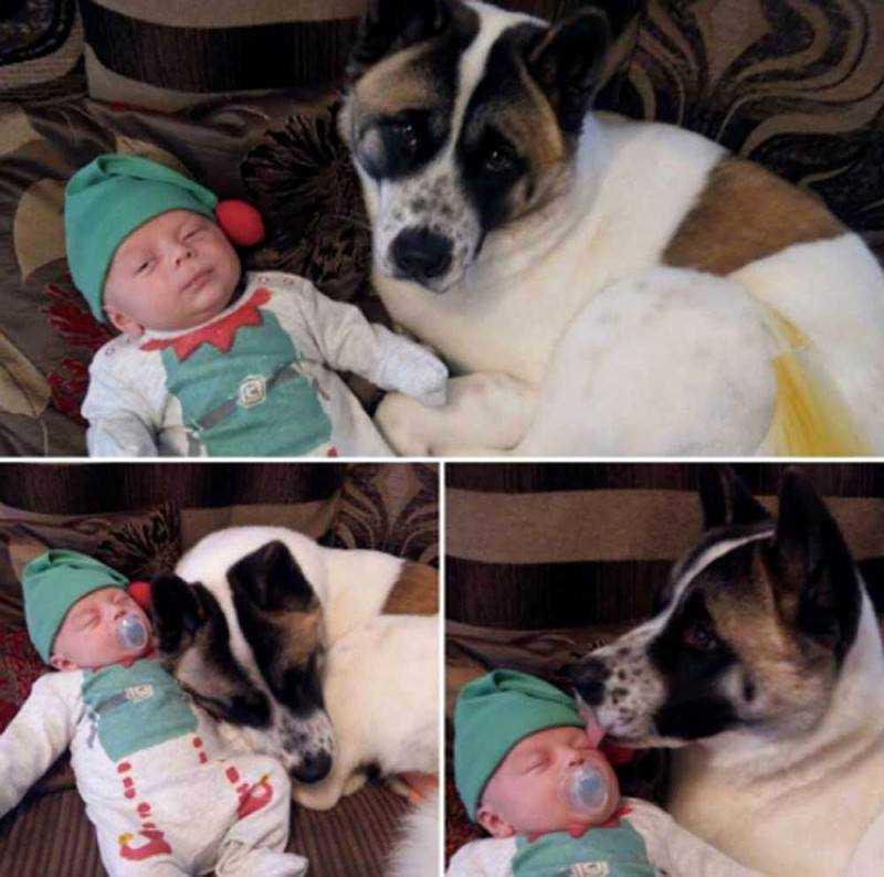 Pies warczał i szczekał na brzuch ciężarnej właścicielki. Wtedy lekarze odkryli najgorsze