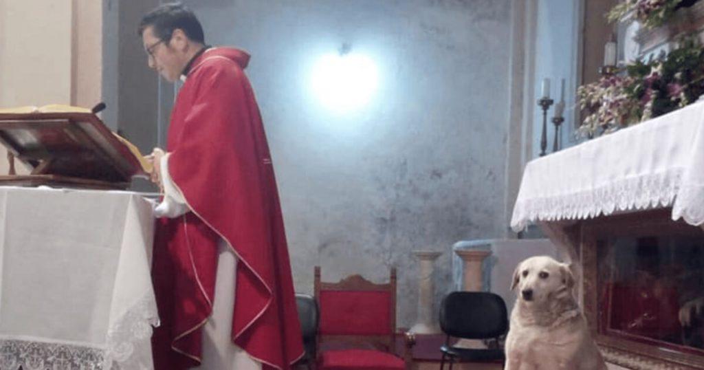 Bezdomny pies co niedzielę uczestniczy w mszy we włoskim kościele
