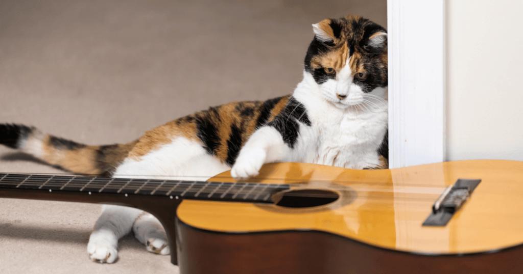 Najlepszy budzik? Kot grający na gitarze codziennie o 4. nad ranem