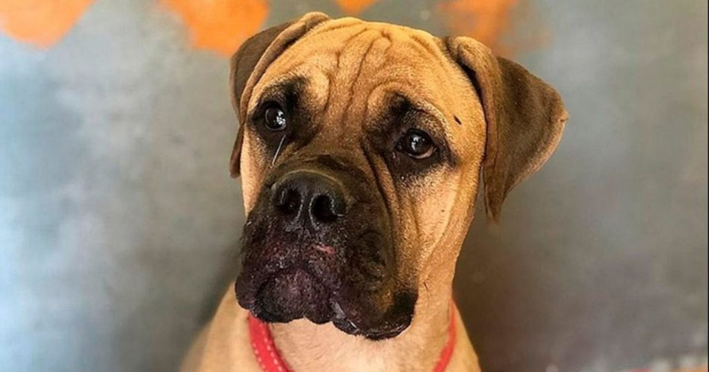 Pies przeszedł 200 km by wrócić do osoby, która go porzuciła. Co zrobił właściciel