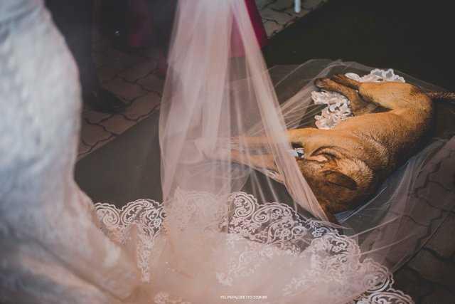 Bezdomny pies podszedł do panny młodej podczas ceremonii zaślubin. Z wycieńczenia zasnął na jej welonie
