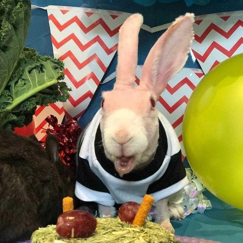 Ten królik jest gwiazdą internetu. Cierpi na rzadką przypadłość