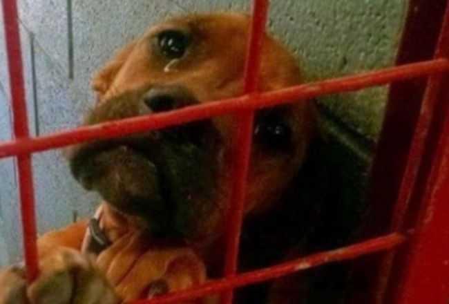 Pies dosłownie rozpłakał się na widok człowieka, błagał o pomoc. To, co się później stało rozrywa serce