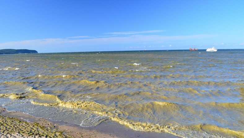Gdańsk: Sinice znów w Zatoce Gdańskiej. Cztery kąpieliska zamknięte