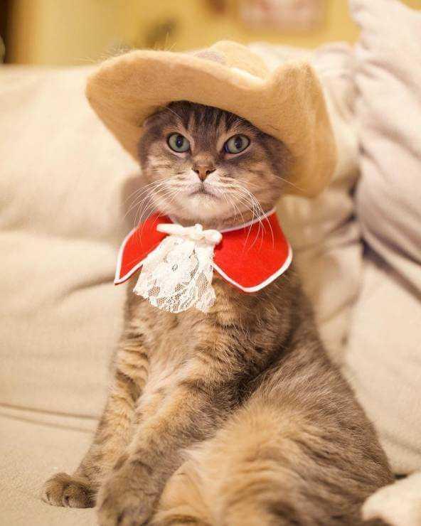 Mężczyzna zrobił kotom czapeczki z ich własnej sierści! Nietypowy pomysł podbija sieć