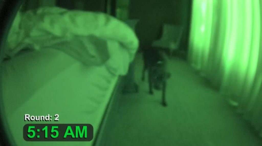 Właściciel zostawił na noc włączoną kamerę. O 5 rano jego pit bull zaczął się dziwnie zachowywać
