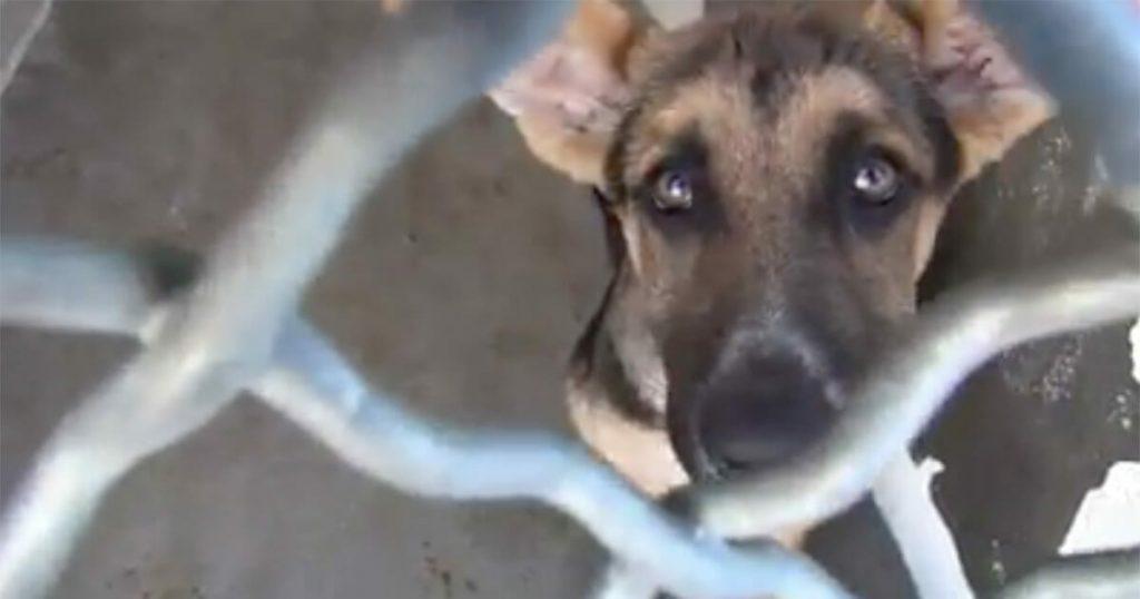 12-tygodniowy szczeniak porzucony przez właścicieli był o krok od śmierci