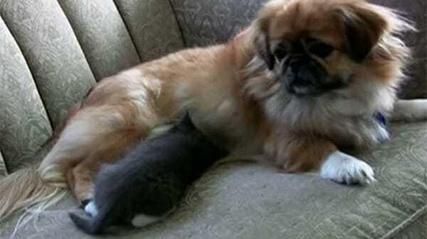 Pies ratuje życie kotkowi – 3 dni później stało się coś niespotykanego