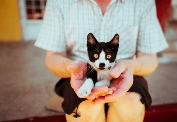 Właściciele kotów są zdrowsi! Badania dowodzą, że posiadanie kota pozytywnie wpływa na zdrowie