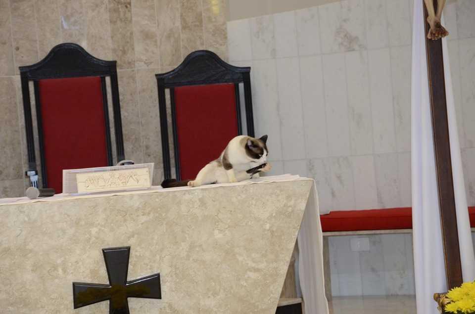 Kot wskoczył na ołtarz i zaczął poranną toaletę. Reakcja księdza rozbraja
