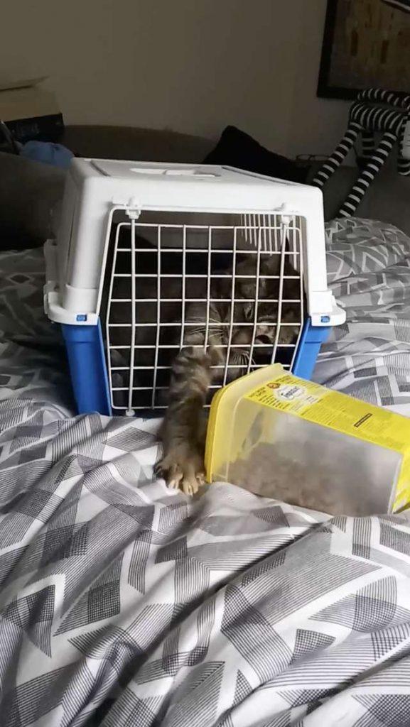 Kotek odwiedził dawnego właściciela w domu starości. Nie mogli się od siebie oderwać