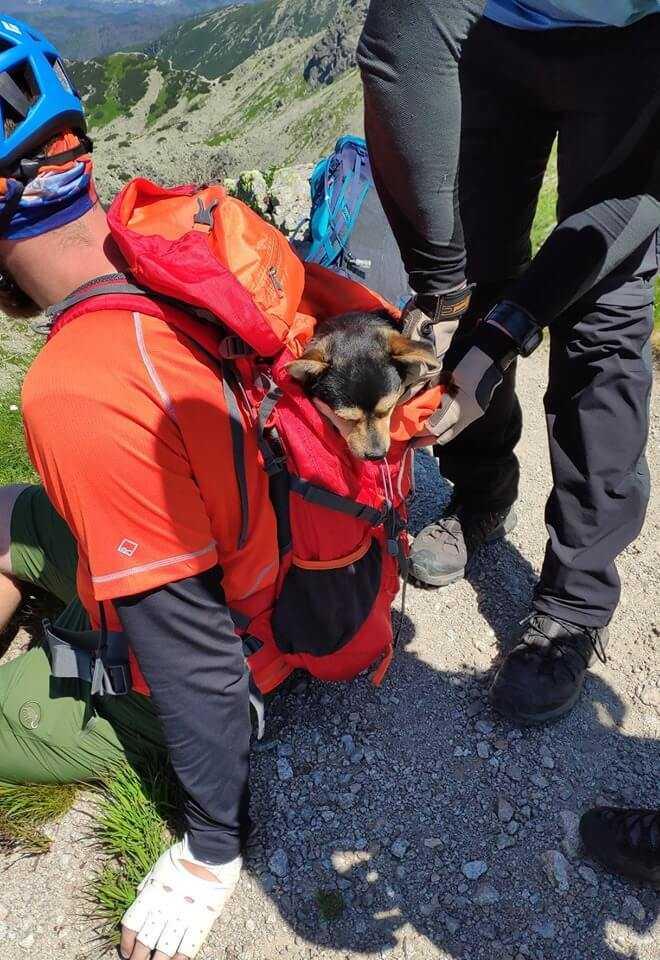Rodzina pojechała na urlop w Tatry. Swojego psa zostawili na szczycie góry i odjechali