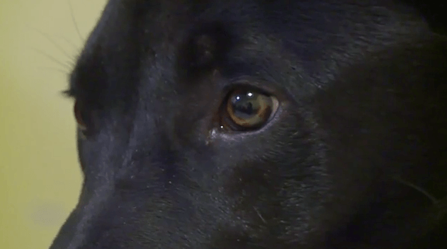 Pies obudził się po wykonaniu eutanazji. Weterynarz nie może w to uwierzyć