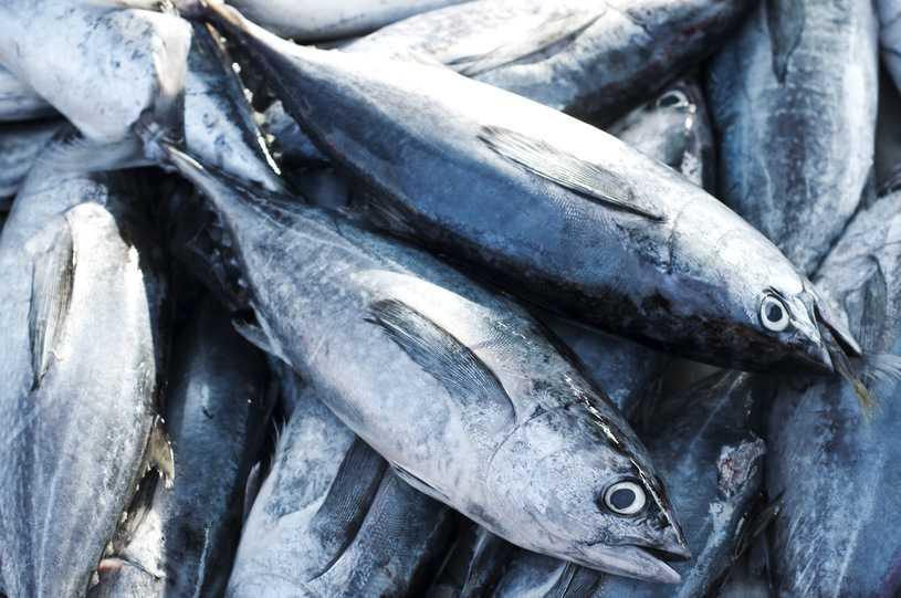 Rośnie poziom rtęci u ryb morskich