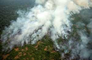 Maas i Tusk: pożary lasów mogą wstrzymać umowę o wolnym handlu